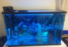 Dosage et traitement de bleu de méthylène pour les aquariums