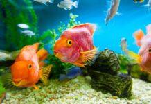 Comment débuter l'aquariophilie?