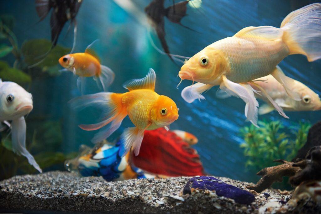 Comment choisir ses poissons ?