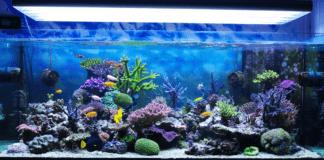 un aquarium recifal