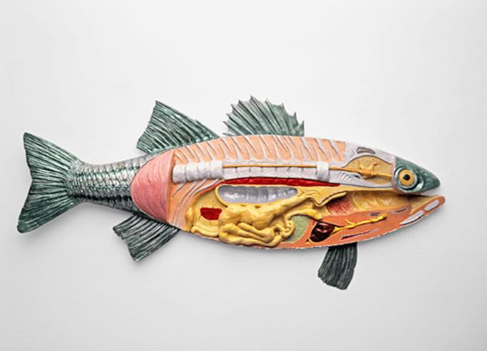 L'anatomie externe et interne d'un poisson - Aquablog