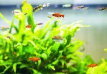 L'importance d'éclairage et des plantes pour l'aquarium