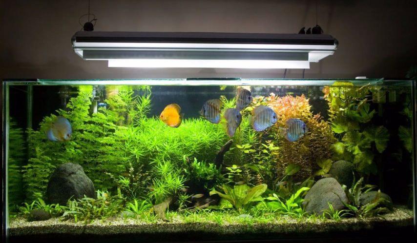 L'importance d'éclairage pour l'aquarium