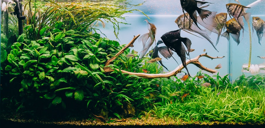 L'importance des plantes pour l'aquarium