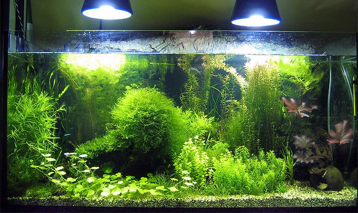 Particularités des plantes aquatiques