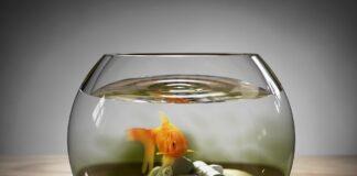 comment baisser les nitrites dans un aquarium