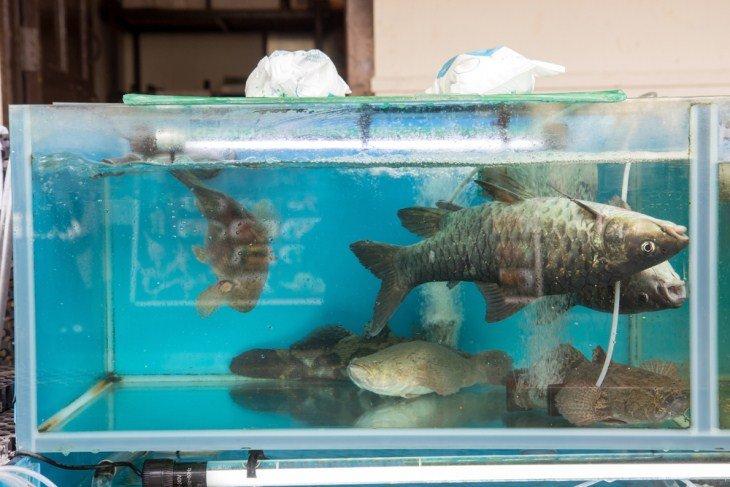 diagnostique aquarium
