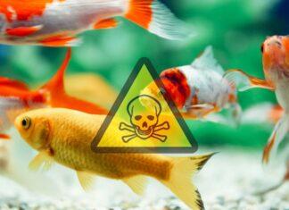 le cycle d'azote aquarium