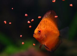 nourrir poissons
