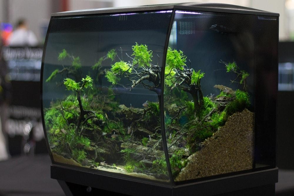 poisson dans un aquaium (1)