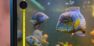 poisson dans un aquaium (2)