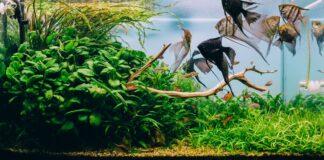Comment refroidir l'aquarium