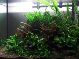Un aquarium avec faible éclairage
