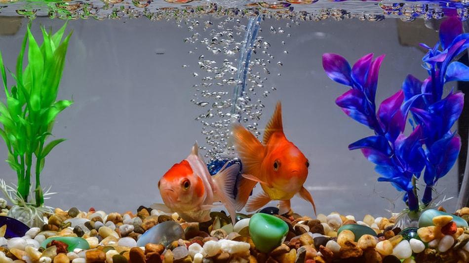 mise en route d'un aquarium d'eau douce