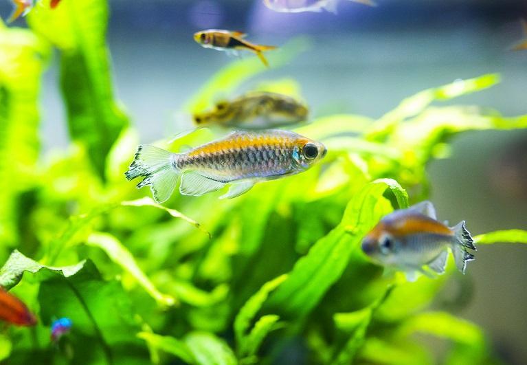nouvel aquarium combien de temps avant de mettre les poissons