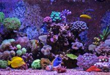 roches vivantes pour un aquarium marin