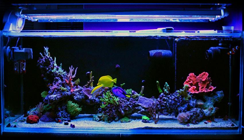 éclairage aquarium récifal
