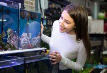 Aquarium faut-il acheter un bac cuve nue ou tout équipé