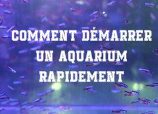 Comment démarrer un aquarium rapidement
