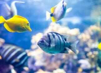 L'aquarium récifal pour les débutants