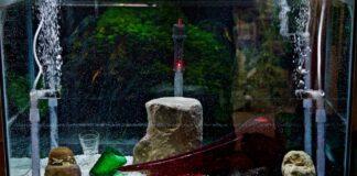 Le principe du filtre pour un aquarium