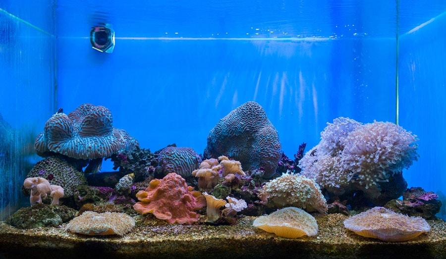pierres vivantes aquarium récifal