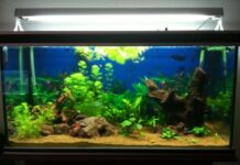 aquarium avec relief et racine