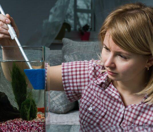 comment se débarrasser des algues dans un aquarium
