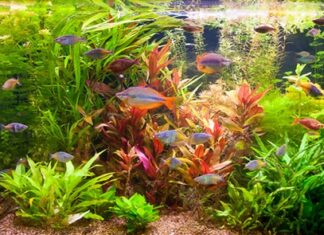 les besoins des plantes d'aquarium