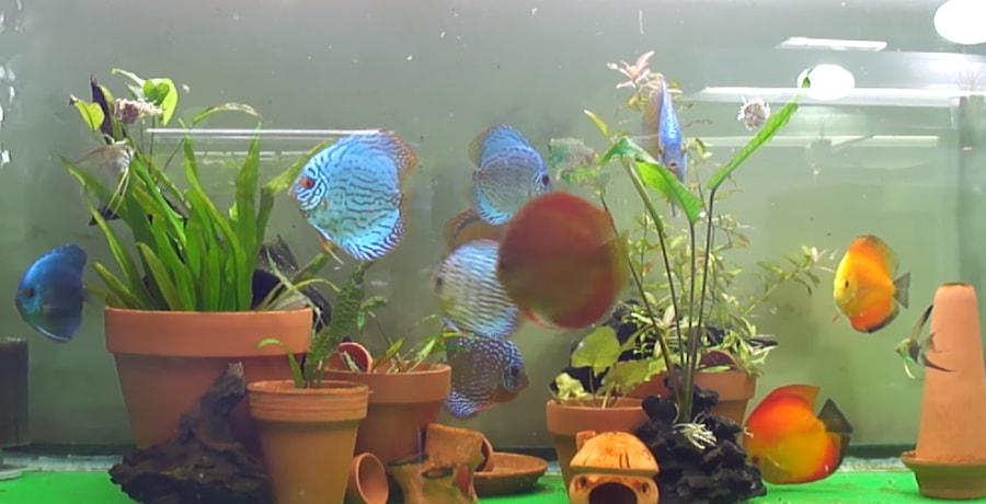 Des plantes en pot dans l'aquarium