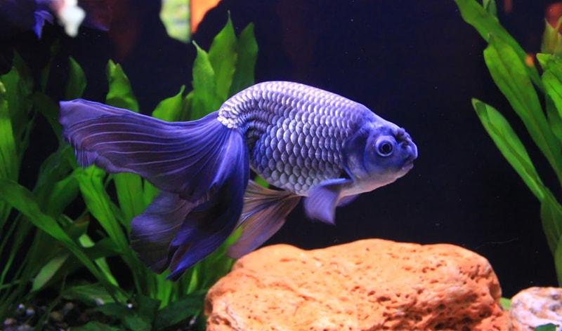 le corps d'un poisson