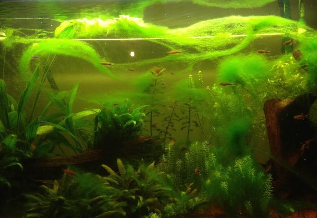 https://www.aquablog.fr/wp-content/uploads/2018/06/les-algues-vertes-filamenteuses-1024x704.jpg