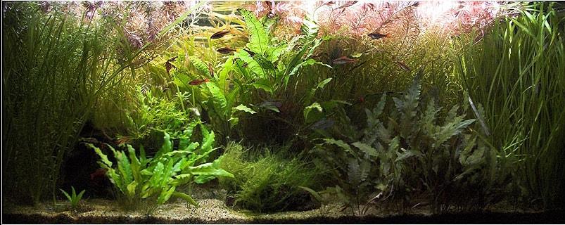 poisson combattant aquarium 180 litre