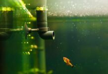 Quel système de filtration choisir pour mon aquarium