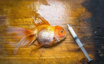 Comment éviter les maladies chez les poissons d'aquarium