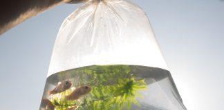 Le transport des poissons vivants