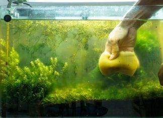 Les différentes méthodes de lutte contre le verdissement de l'eau