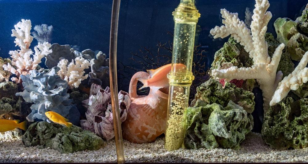 Préparer son aquarium pour les vacances