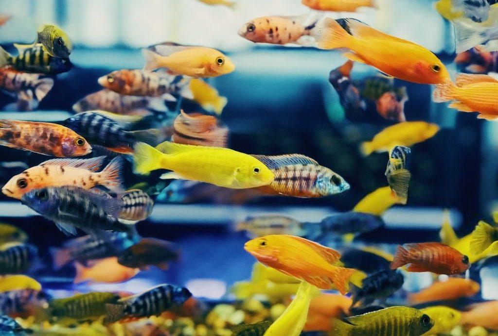 Quels poissons dans quel litrage