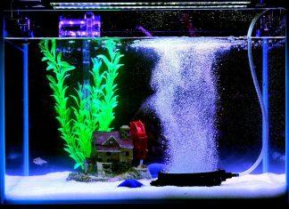 aquarium bulleur la nuit
