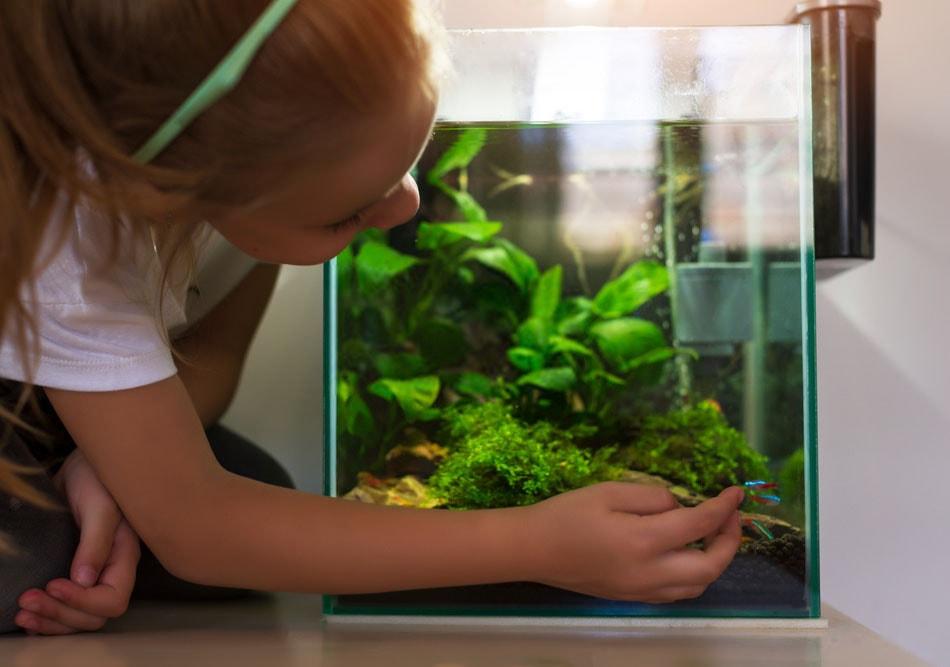 quels poissons pour nano aquarium