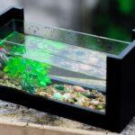 dureté de l'eau en aquarium