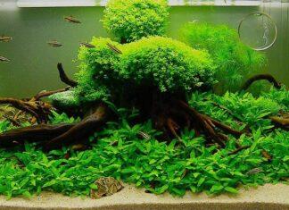 tout savoir sur les plantes d'aquarium