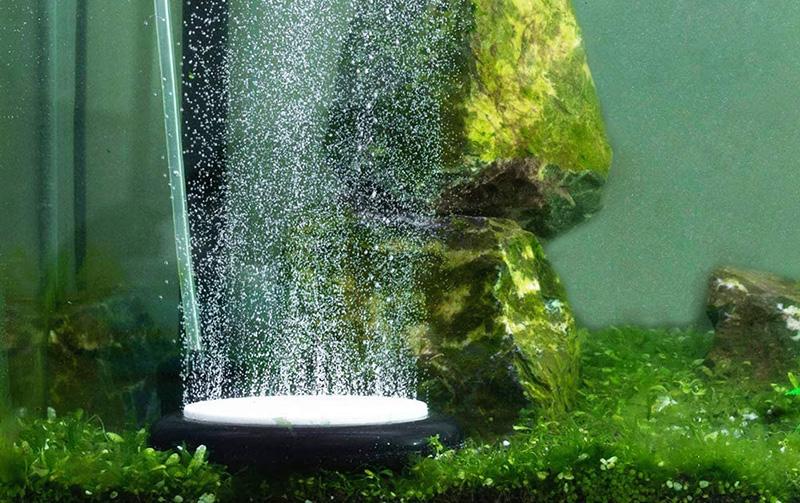 L'oxygène dans l'aquarium