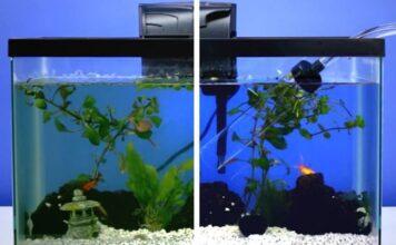Nettoyage complet d'un aquarium