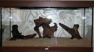 aquarium amazonien (1)