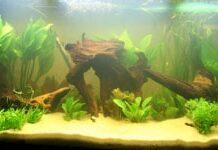 aquarium amazonien (2)